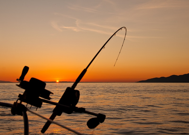 game fishing - things to do in st helens tas - the surfside
